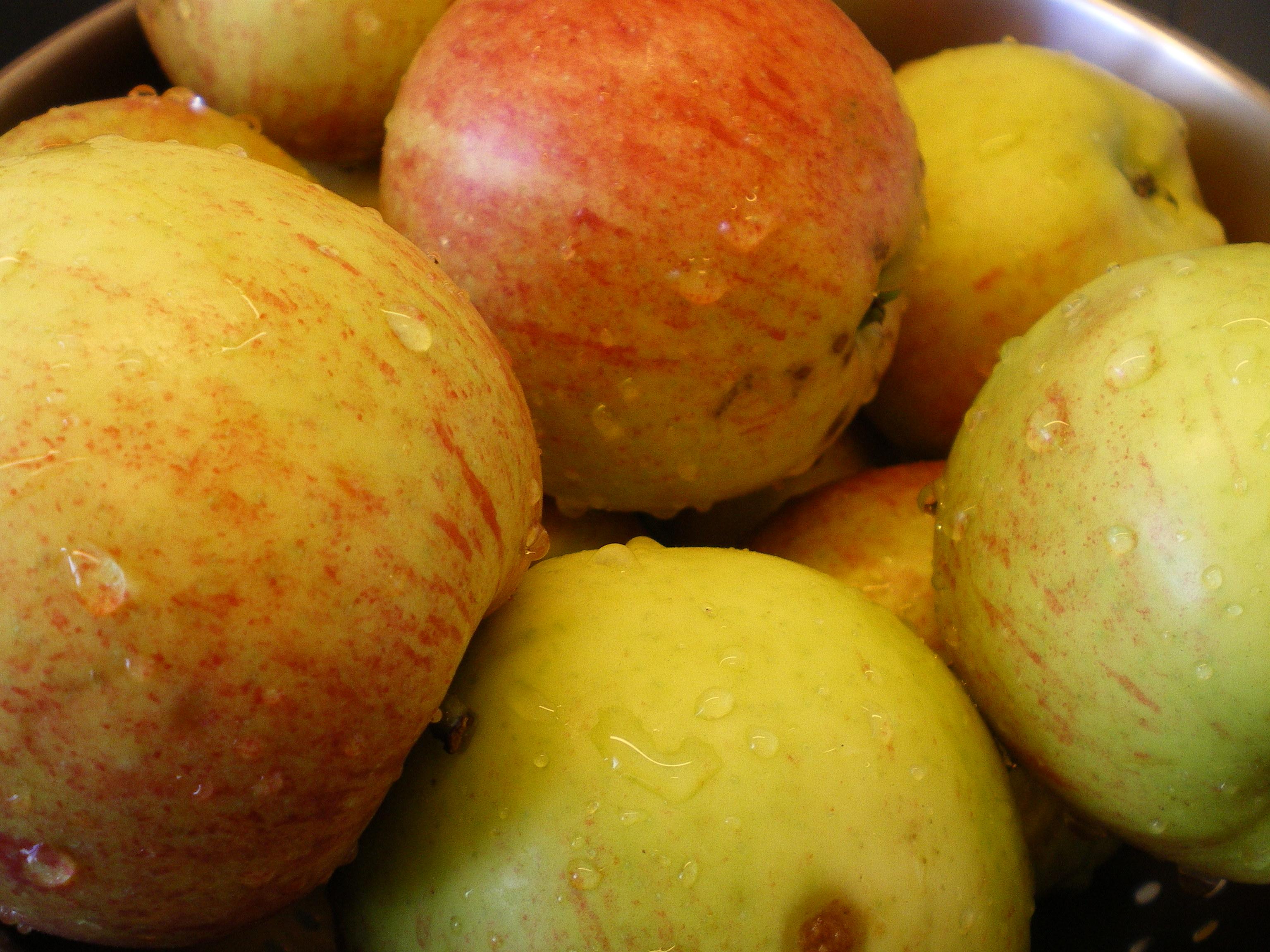 Æblefest