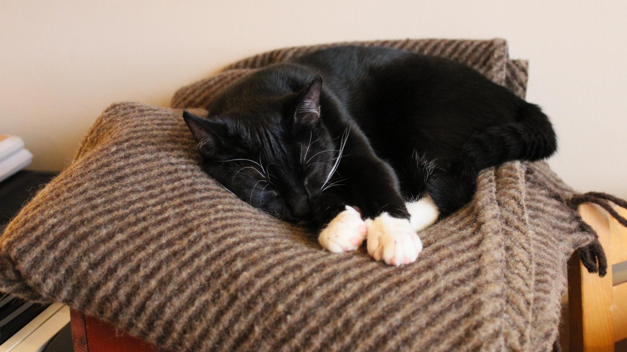 Sovende kat