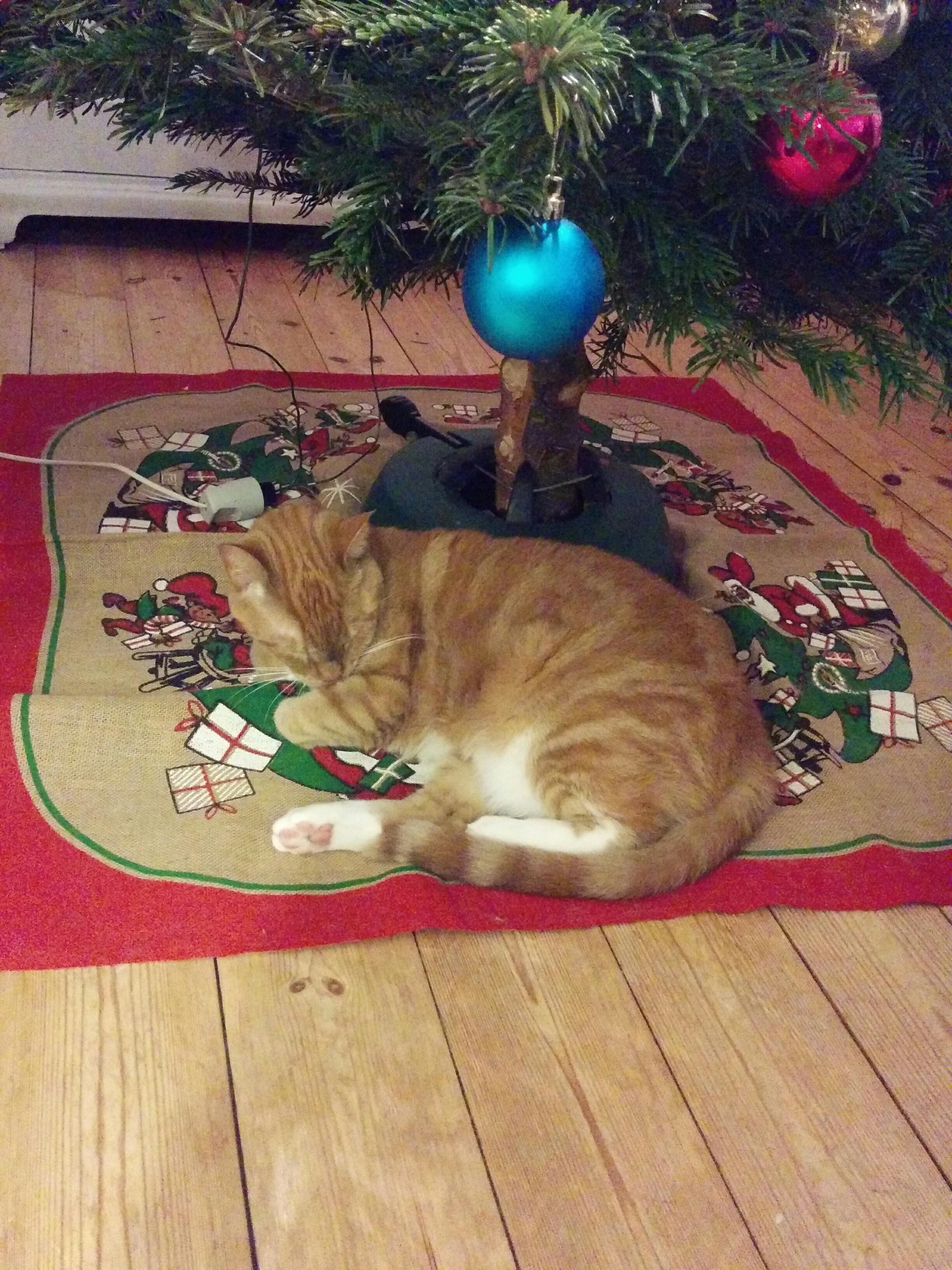 Sovende Stoffer under juletræ